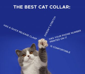 What's the best cat collar?